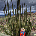Organ Pipe Cactus The Visitor 1 by Bob Christopher