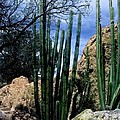 Organ Pipe by Kathy McClure