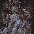 Organic by Dawn Fairies