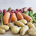 Organic Garden Vegetables by Sophie McAulay