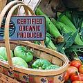 Organic by Mim White