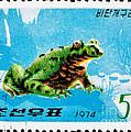 Oriental Black Firebelly Toad by Jim Pruitt