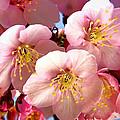 Oriental Flowers by Lyriel Lyra