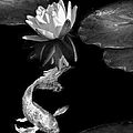 Oriental Koi Fish And Water Lily Flower Black And White by Jennie Marie Schell