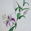 Oriental Lily by Sandy Brooks