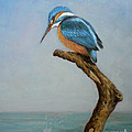 Original Animal Oil Painting Bird  Art Kingfisher On Canvas#16-2-6-15 by Hongtao     Huang