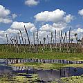 Orlando Wetlands Cloudscape by Mike Reid