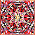 Ornamental Autumn Mandala by Isabella Howard