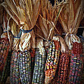 Ornamental Corn by Dale Jackson