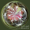Ornamental Dandelion by Kaye Menner