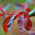 Ornamental Plum Tree Leaves With Raindrops - Digital Paint by Debbie Portwood