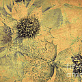Ornamental Thistle Flower by Heiko Koehrer-Wagner