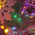 Ornaments-2090 by Gary Gingrich Galleries