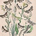 Orthosidae - Hadenidae by W