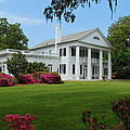 Orton Plantation by Bob Sample