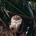 Oscar The Barn Owl by Marilyn MacCrakin