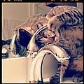 Oskar At The Faucet by Mick Szydlowski