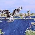 Osprey At Tuttle Marsh by Kate Ford