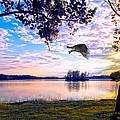 Osprey Leaving Perch Sundown Lake by Randall Branham
