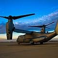 Osprey Sunrise Series 1 Of 4 by Ricky Barnard