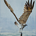 Osprey With Fish by Alan Pickersgill