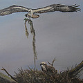 Ospreys Together by Polly Berlin