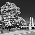 Osu Campus 9216 by Guy Whiteley