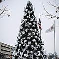 Osu Tree by Cathy Smith