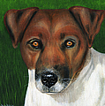 Otis Jack Russell Terrier by Michelle Wrighton