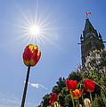 Ottawa Tulip Festival by Mircea Costina Photography