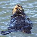 Otter 2 by Daniel Jakus