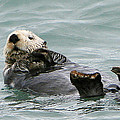 Otter At Play by G L McGrath