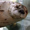 Otter Be Lookin' At You Kid by John Haldane
