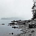 Otter Cliffs by Joann Vitali