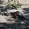 Otter by Linda Kerkau