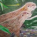 Otter Plot by Graham Wood