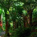 Otway Rainforest by Saroj Gunasekara