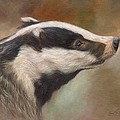 Our Friend The Badger by David Stribbling