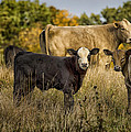 Out For A Graze by Linda Tiepelman