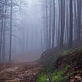 Out Of The Mist - Casper Mountain - Casper Wyoming by Diane Mintle