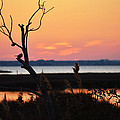 Ocean City Sunset Out On A Limb by Bill Swartwout Fine Art Photography