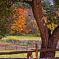 Out To Pasture by Joann Vitali