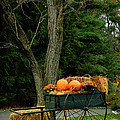 Outdoor Fall Halloween Decorations by Amy Cicconi