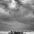 Outer Banks - Driftwood Bush On Beach In Surf IIi by Dan Carmichael