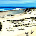 Outer Banks Sand Dunes Beach Ocean by Katy Hawk