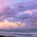Outer Banks Sunrise by Mary Almond