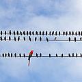 Odd Bird Out by Les Palenik