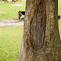 Oval Tree Art by Christy Cox