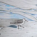 Overcast Day With Sanderlings by Linda Williams