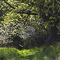 Overgrown Garden by Yulia Kazansky